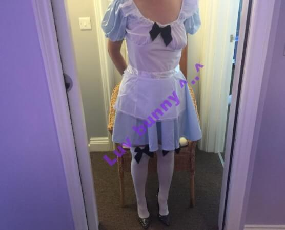 Bunny dressed as Alice in Wonderland, standing.